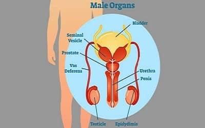 prostata bolovi)